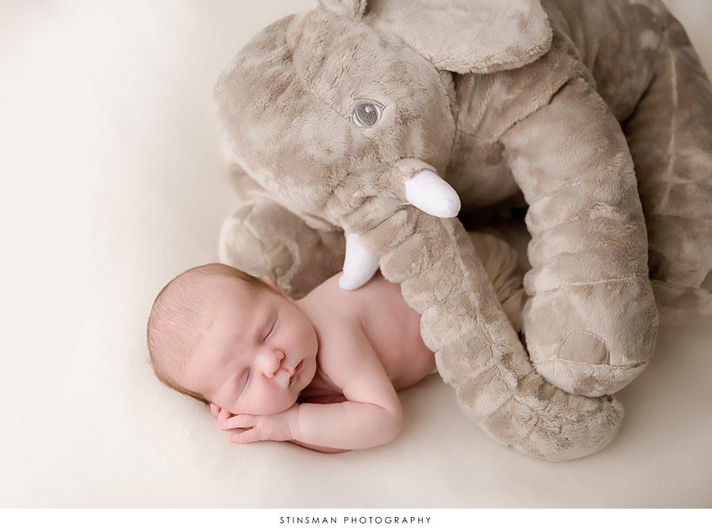 pottery barn elephant and baby boy sleeping during newborn photo shoot.